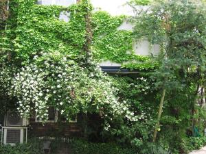庭で草花を育てる~蔦の絡まるアトリエからイングリッシュガーデンへ~