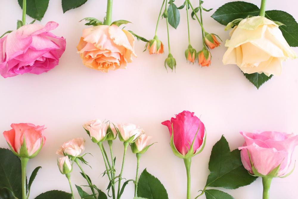 バラの季節~食器に彩られるバラたち~