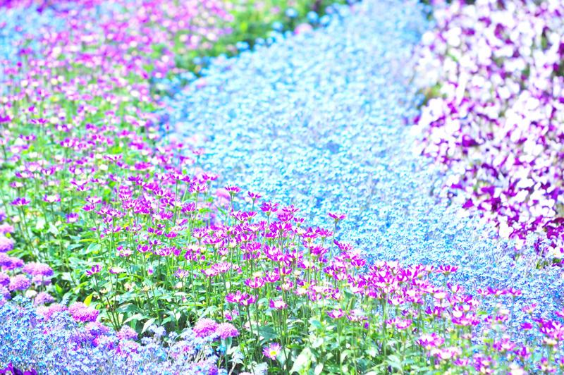 ヴィクトリア女王様の時代のお花