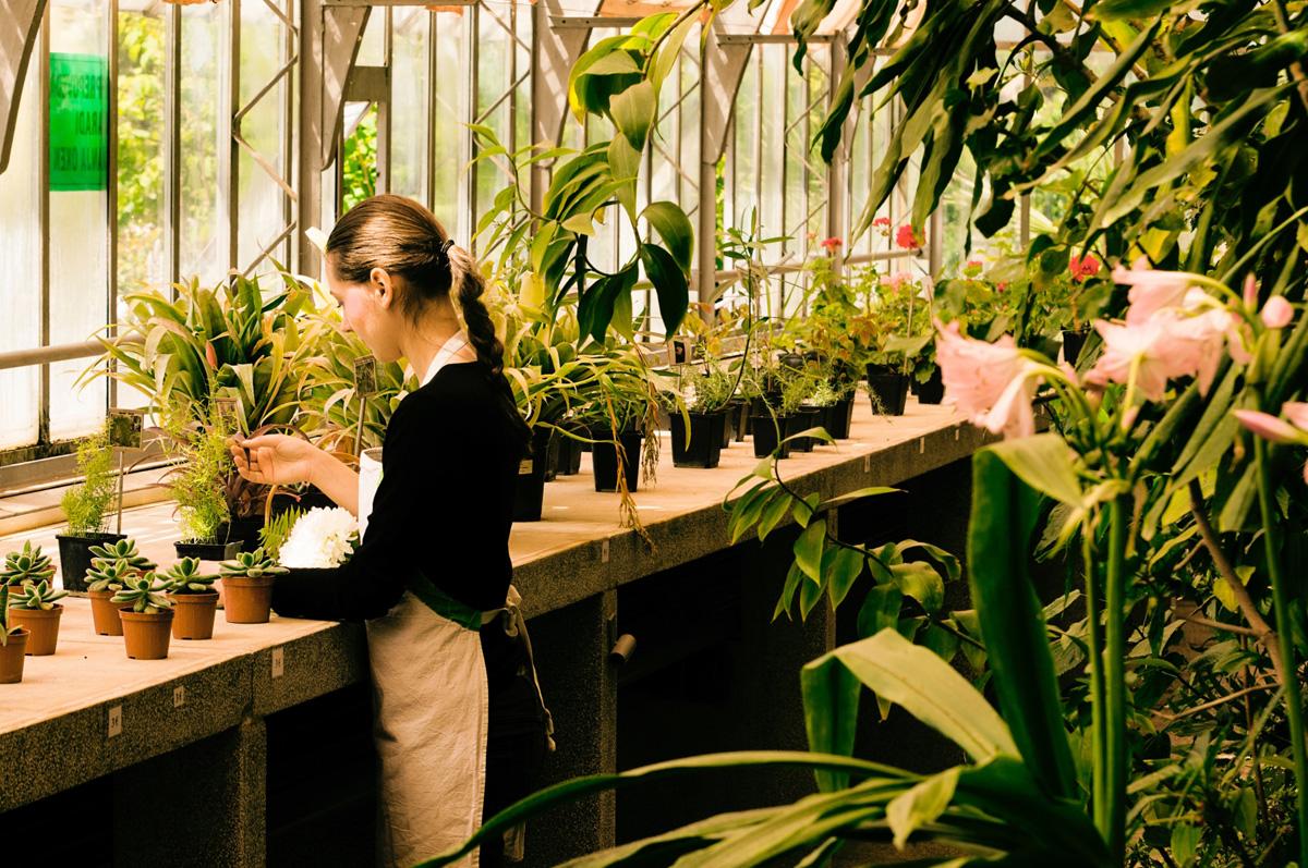 花卉農家で働く