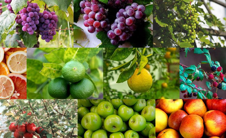 フラワーアレンジメントに使える!お家で育てられるフルーツ(果樹)の種類と選び方