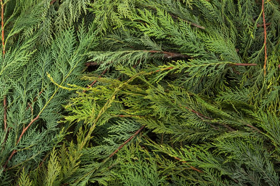 イギリススタイルフラワーアレンジメントによく使われるエバーグリーン