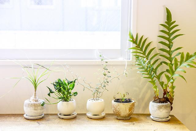 観葉植物の冬越しの仕方