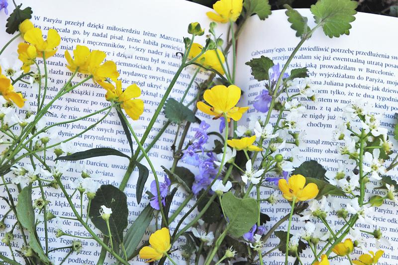 花言葉の由来と発祥