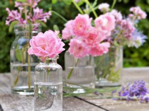 知っているとバラがもっと好きになる!バラの香りの種類と匂い方