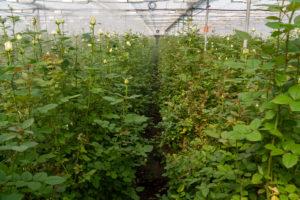 第2回花農家研修ツアー参加者の感想と報告