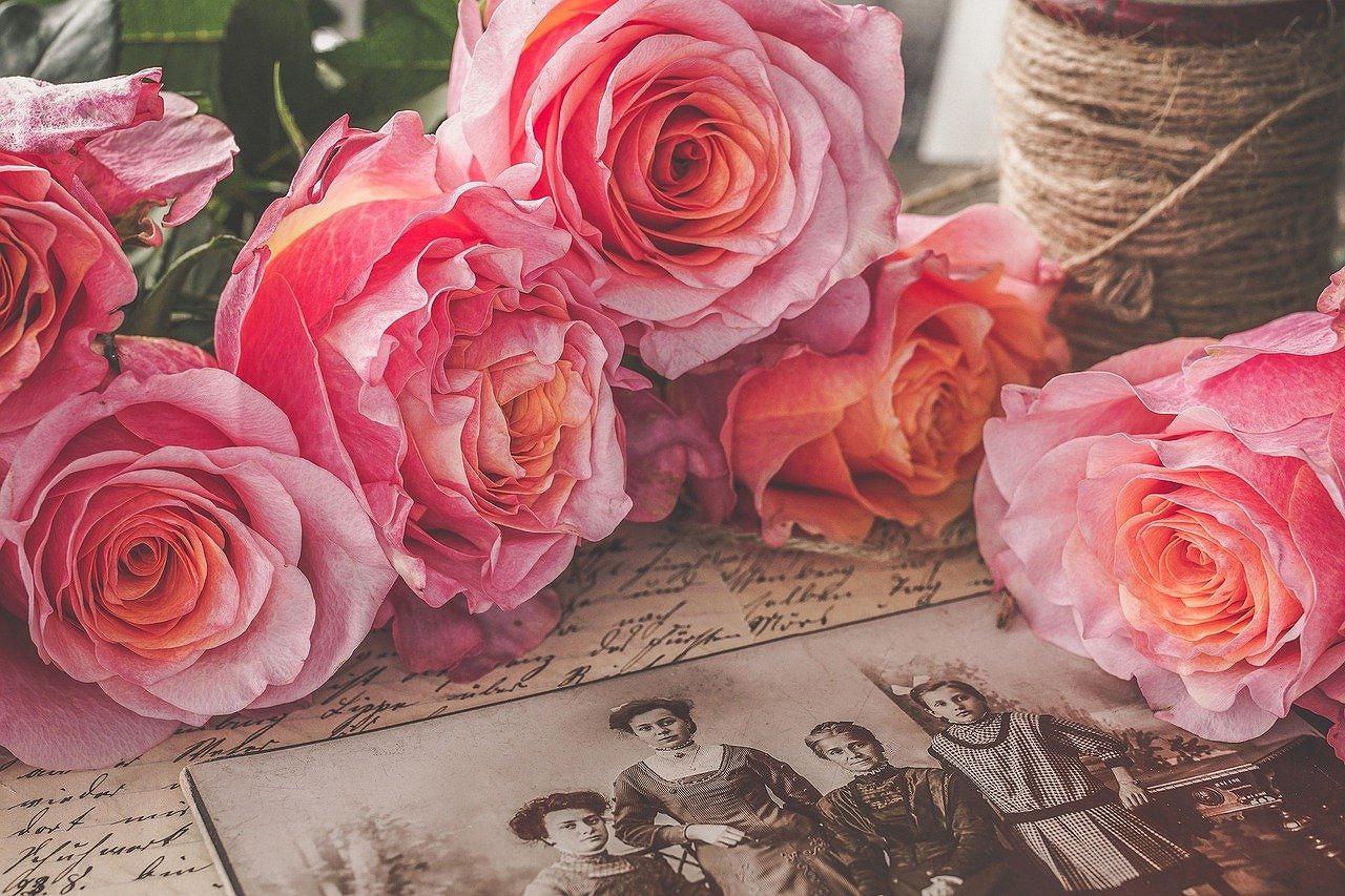 【植物の成り立ちと知識】バラの歴史