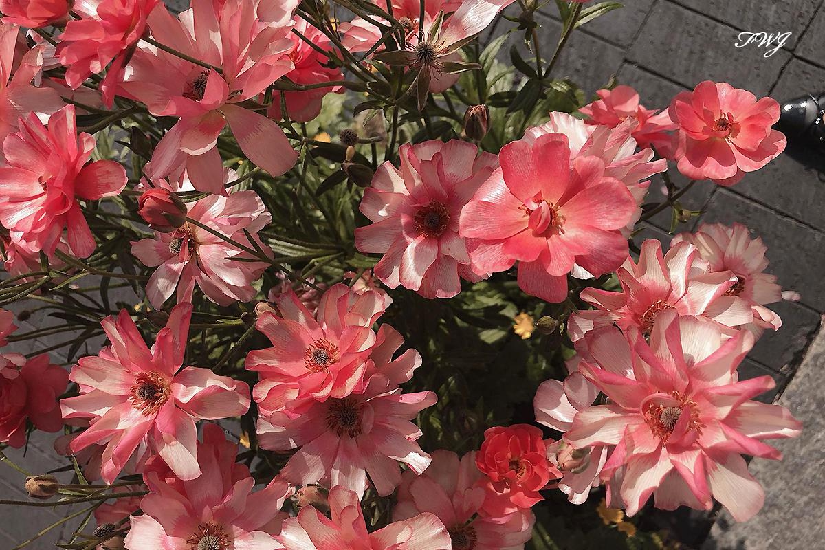 第1回花農家さんインタビュー 宮崎県の綾園芸さんをご紹介いたします