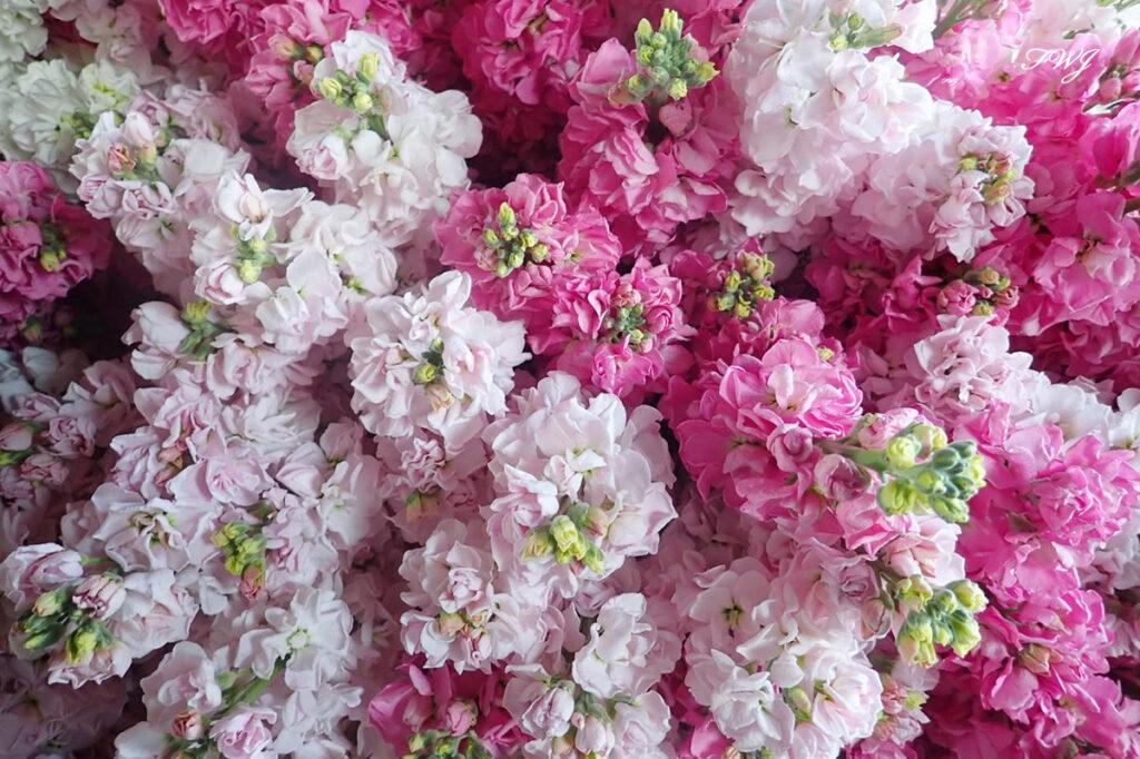 香りのある花 ストック